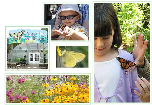 "Butterfly Release Day at ""Butterflies & Blooms"" with butterfly attracting flowers"