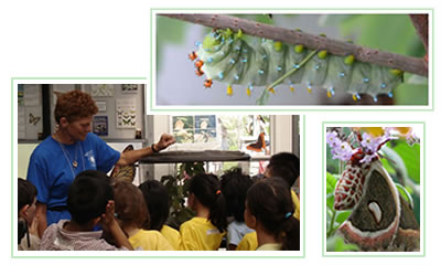 """Butterflies & Blooms"" Butterfly Conservatory with educator and students observing metamorphosis"